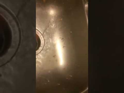 Salami vs sink disposal
