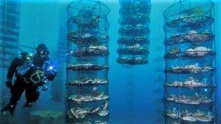9 UNUSUAL Things Under the Sea