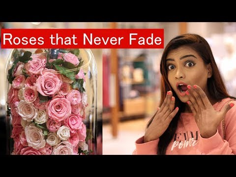 Roses that never die : window shopping vlog