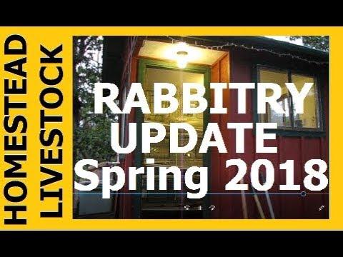 HOMESTEAD LIVESTOCK -  Rabbitry Update Spring 2018