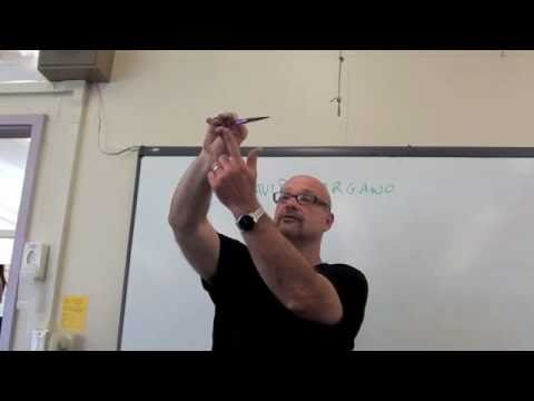 HAIRCUTTING: HOW TO CHOOSE YOUR SHEARS, HOW TO ADJUST SCISSORS: BY DAVID GARGANO
