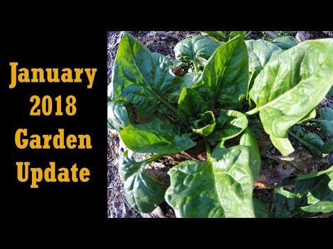 January 2018 (Michigan) Garden Update