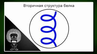 Download Химия 12 класс Химия и жизнь Биохимия Белки Video