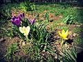 красиві весняні квіти красота в яку важко повірити Song mp3