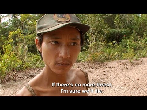 The Effects Of Deforestation On The Penan -Tribe With Bruce Parry - BBC