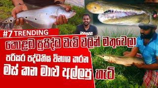 කොළඹ ප්රසිද්ධ වැව් වලින් මස් කන මාළු අල්ලපු හැටි | Catching Monster Fish in Sri Lankan lakes