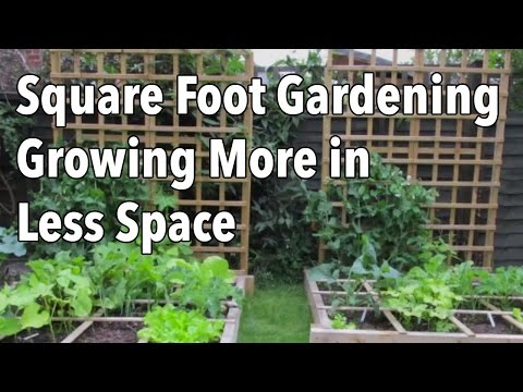 Square Foot Gardening (SFG): Growing More in Less Space