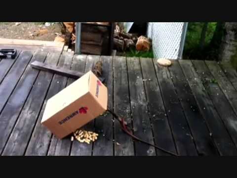 Kids catch squirrel in a box trap