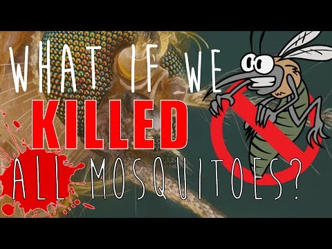 What Would Happen If We Killed ALL Mosquitoes?
