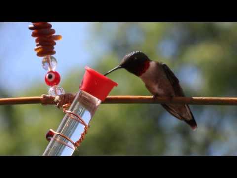 Bee Free Hummingbird Swing with Feeder