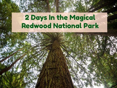 2 DAYS IN THE MAGICAL REDWOOD NATIONAL PARK