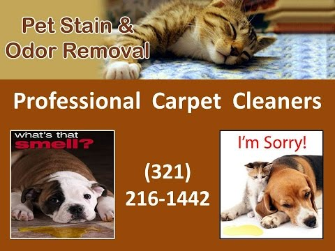 Pet Stain & Odor Removal Carpet Cleaning Apopka FL