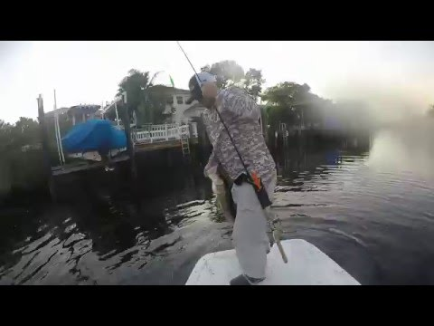 Snook fishing Tampa Bay winter