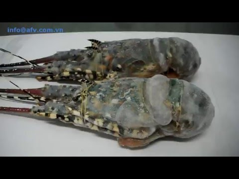 Frozen Lobster || lobsterafv.com