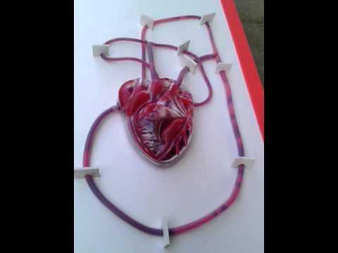 Heart working  model from mridula crafts and arts chennai 9840686955