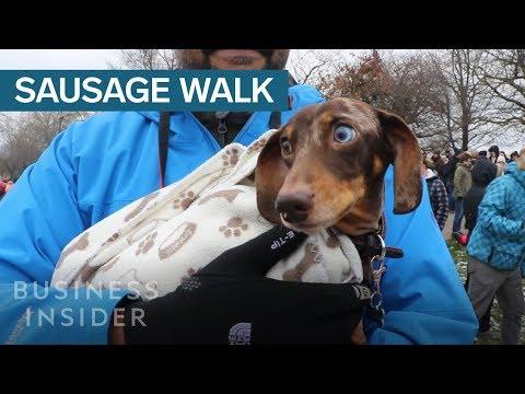 1,000 Dachshunds Gathered For A Mass Walk In London