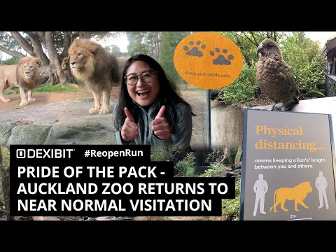 Pride of the pack as Auckland Zoo returns to near normal visitation | #ReopenRun
