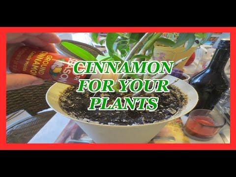 Cinnamon for your plants