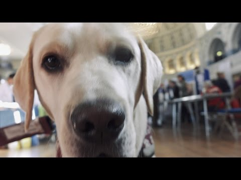 Get the Picture meet the Hearing Dogs