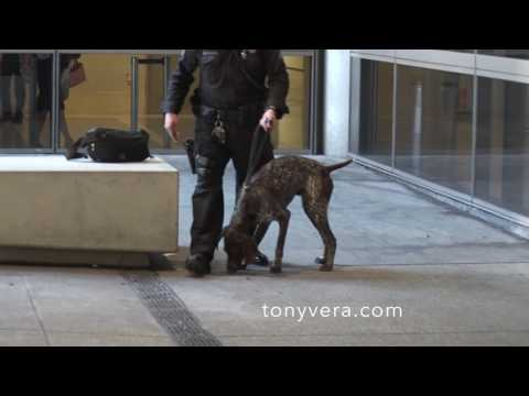 LAPD k 9 unit and LAX PD at work at LAX