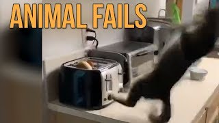 Animal Fails Compilation || Funny Videos