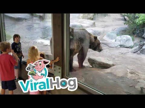 Bear Poops In Front of Kids || ViralHog