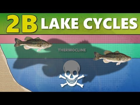 INTERMEDIATE GUIDE TO BASS FISHING: Part 2B - Lake Cycles (Thermocline/Turnover)