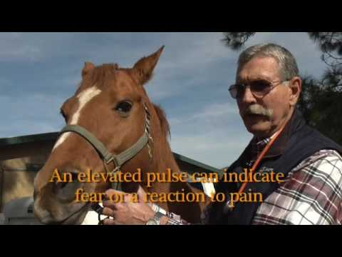 How To Take Your Horse's Pulse
