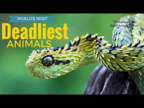 10 Most Deadliest Animals In The World