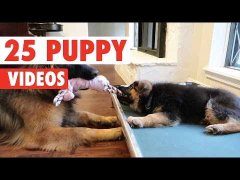 25 Cute Puppy Videos Compilation 2017