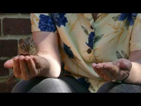 The Chipmunk Whisperer (4K video)