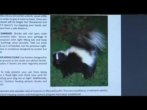Pets beware: It's skunk mating season
