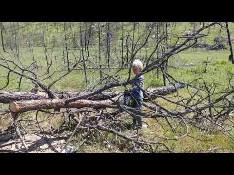 Tree cutting hazards
