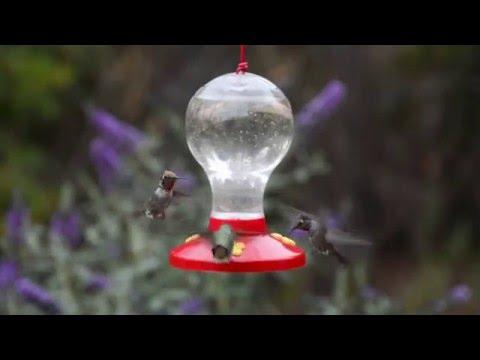 Garden Song® Clear Plastic Hummingbird Feeder