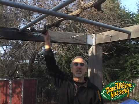 How To Grow Grapes On An Arbor