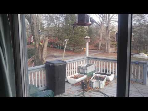 Squirrel vs. electric fence