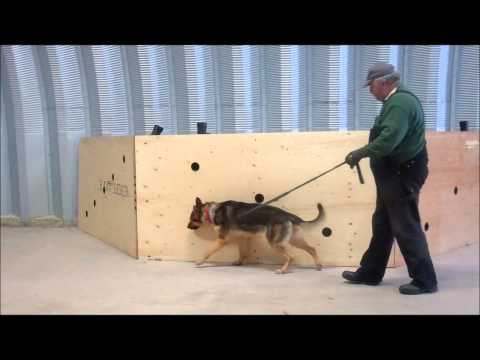 Drug Detection Dogs Training