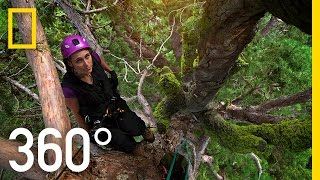 360° Climbing Giants | National Geographic