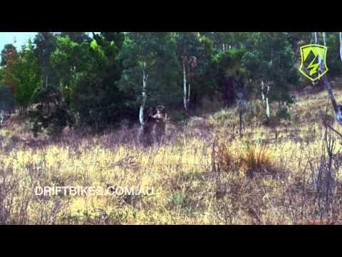 Kangaroo Fight Boxing Kungfu