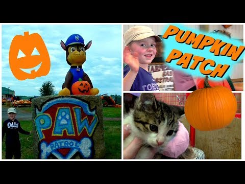 Family Fun Pumpkin Farm Day - Hay Ride, Pony Ride, Horses & Kittens