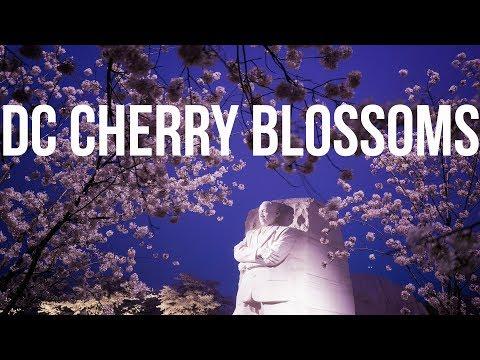 Washington DC Cherry Blossoms 2018