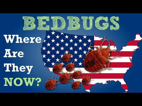 BEDBUGS Where are they Now?