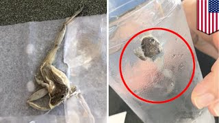 Waffle House frog: Couple find disgusting dead frog in water glass at Tallahassee diner - TomoNews