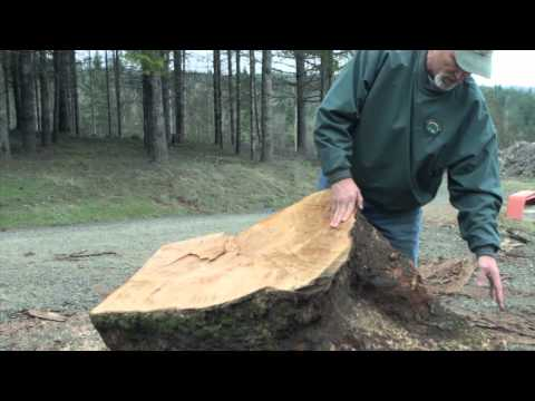 From Burl To Block: The Story of Your Wood