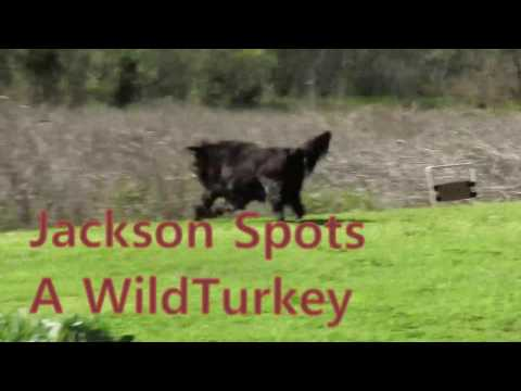 Jackson Spots That Turkey