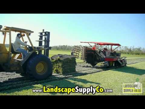 Orlando Sod Prices - call 407-240-1023 - How much does sod cost?