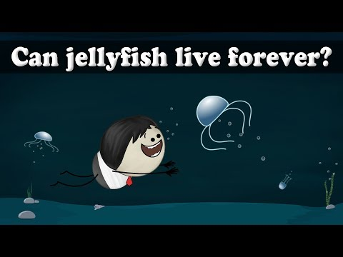 Can jellyfish live forever? | It's AumSum Time