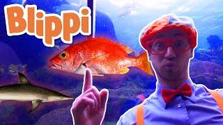 Blippi | Blippi Visits The Aquarium and MORE! | Explore with Blippi |  Educational Videos for Kids
