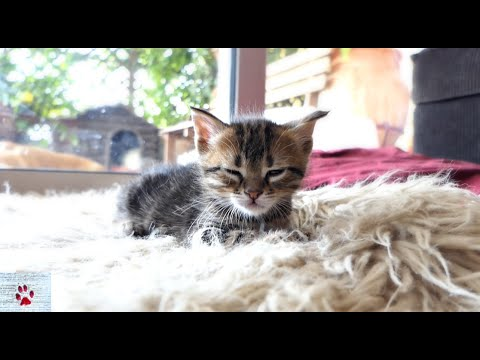 The Tiger sleeps tonight | Rescue tale of an orphan kitten