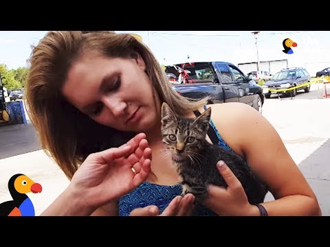Family Finds Stray Kitten At Gas Station That Changes Their Lives | The Dodo